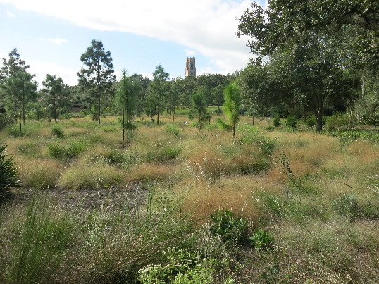 Sandhill plantings at Bok Tower Gardens