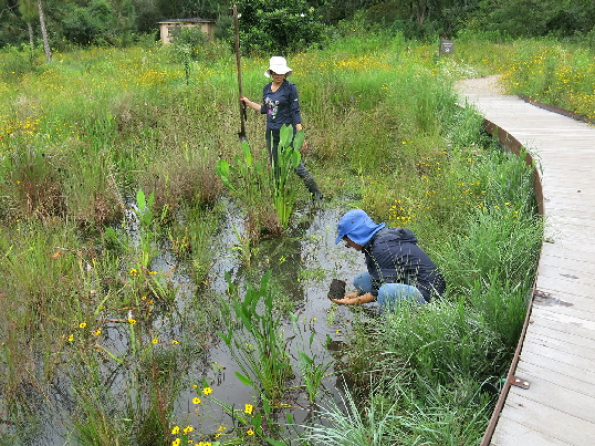 Part of our wonderful careing crew adding plants to the wetland edge.
